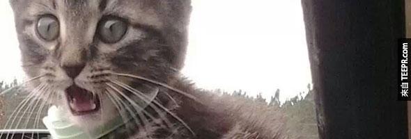 貓咪表情後面的含意