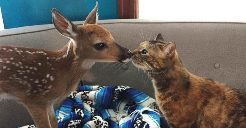 20張「可愛養分超高」動物照 看到笑臉喵心情超好~