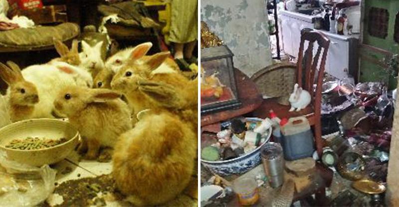 領養片/兔子「繁殖失控2隻→50隻」殘存在垃圾堆中 碗裡面吃的全是餿水!