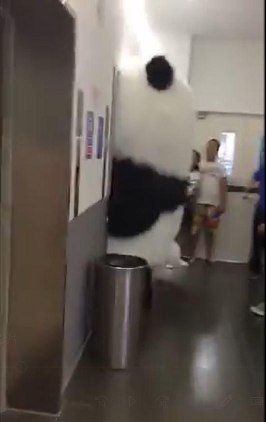 超萌大貓熊等電梯!肖想「全身進入塞好塞滿」 下場就是玩偶界最糗卻超療癒♡