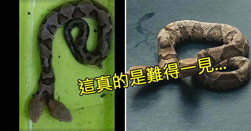 後院出現不知名軟Q生物!猛烈蠕動嚇瘋屋主 近看竟是「稀有雙頭劇毒蛇」