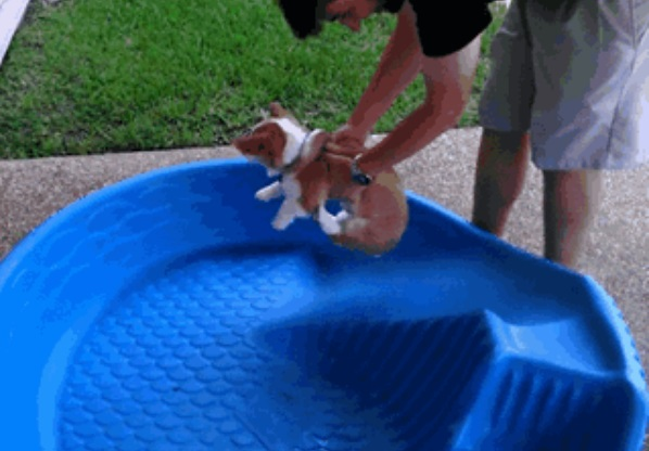到底什麼妄想症?各方呆萌狗「狗爬式隔空游泳」 傻呆臉:我到目的地了嗎♥