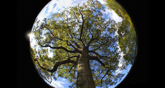 20個「你絕對臣服於大自然」的尖叫奇景 這棵樹近看被蜘蛛完整包覆!