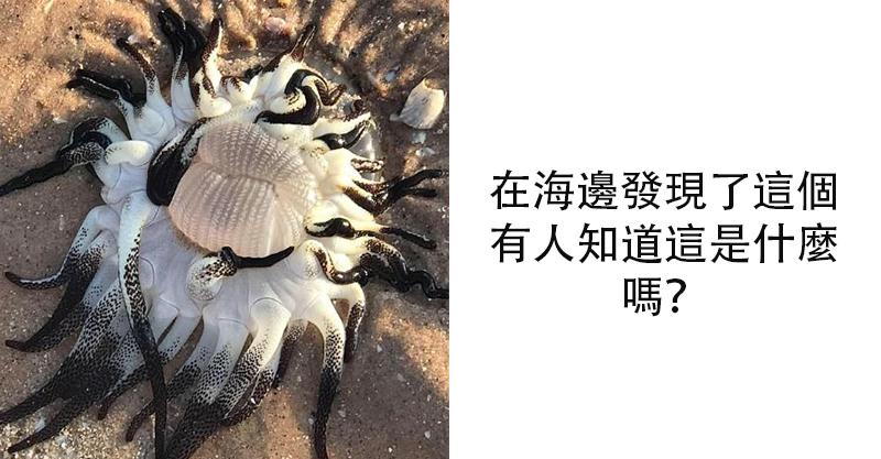 沙灘出現「詭異外星生物」 張狂黑白觸手超嚇人...輕碰到就等著「痛到哭喊媽媽」