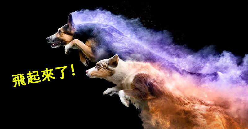 他在狗狗身上灑下「超夢幻的魔法粉末」 跳起來馬上按快門…捕捉到牠們「化身神話」的一刻!