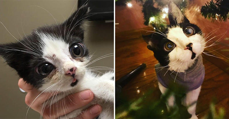 可憐小貓被裝箱丟走廊 她好心抱走卻驚見牠有超浮誇「玻璃彈珠眼睛」❤