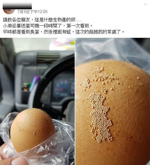 是蟲卵嗎?他驚見蛋殼「黏滿一顆顆白色芝麻」 養雞人給出「生物解答」網直呼:長知識