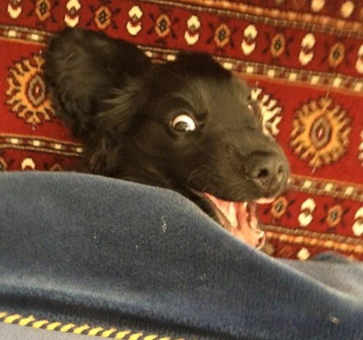 你是人扮的吧!17張照片證明「狗狗裡面絕對藏了一個工讀生」
