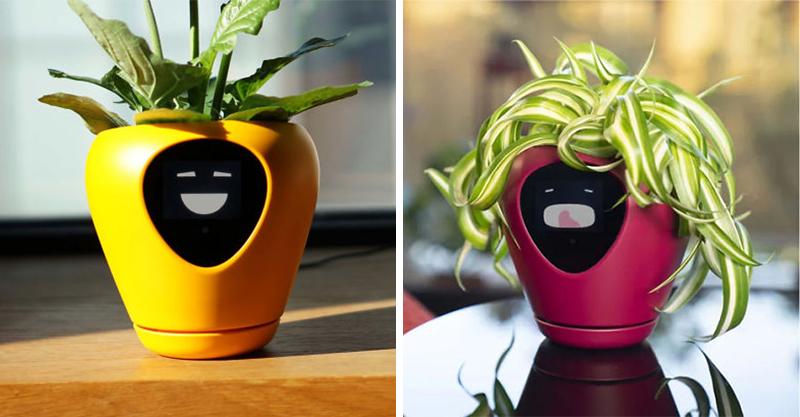 誰說植物沒感覺?新款智能盆栽「能夠感應植物心情」 想喝水曬太陽都能直接說!