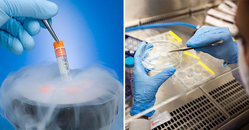 網傳科學家已成功製造「人猴混種」胚胎 實驗室「設在中國」原因太爭議!