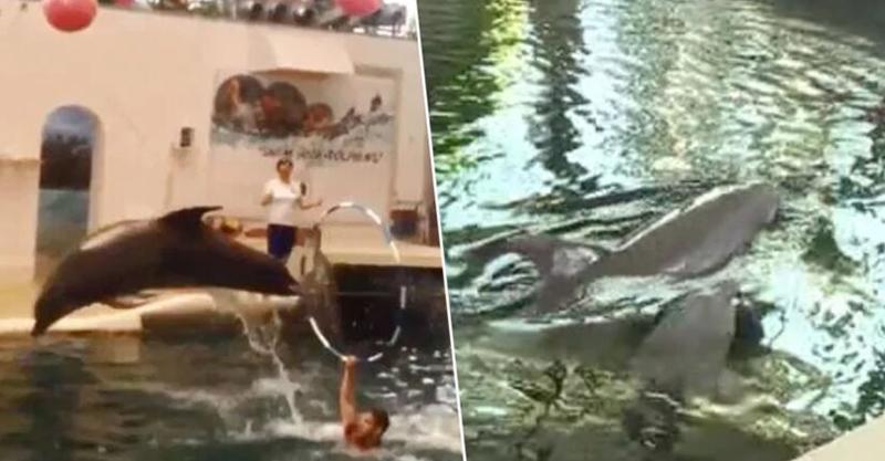 小海豚「出生9天」就被迫表演 遊客目睹「牠失去呼吸」震驚:這已經是第6隻