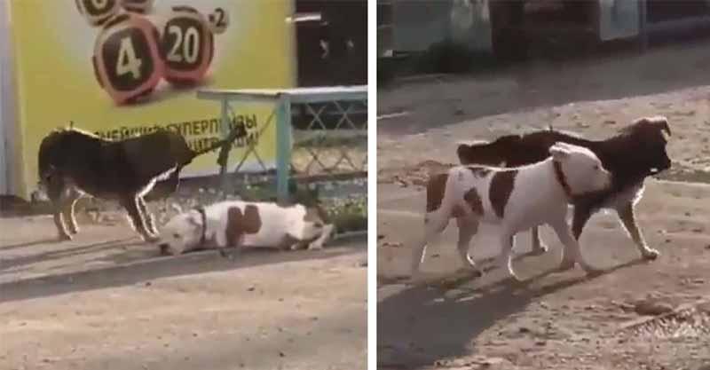 影/善良汪星人看到「狗狗被綁路邊」!牠不顧一切做出「超感人舉動」網友卻笑到噴淚