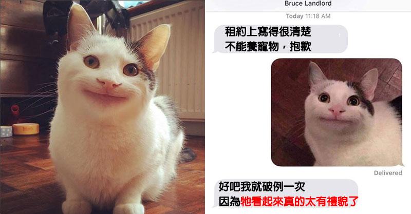爆紅梗圖「假笑貓」真的不是P圖!主人PO「禁寵房東對話」用一張圖就馬上收服~