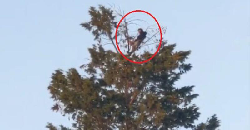 影/隔離的最高境界!悠哉男在「7層樓高樹頂」野餐吃下午茶