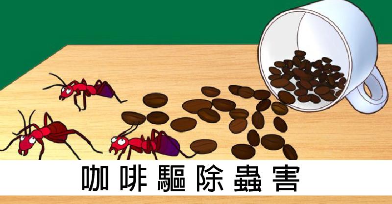 9種咖啡「還沒被發現」的神奇用處 男友的「臭腳鞋」也可以變超香