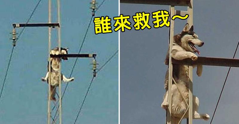 傻哈「爬上電線桿」下不來還傻笑 主人崩潰:每天至少救一次!