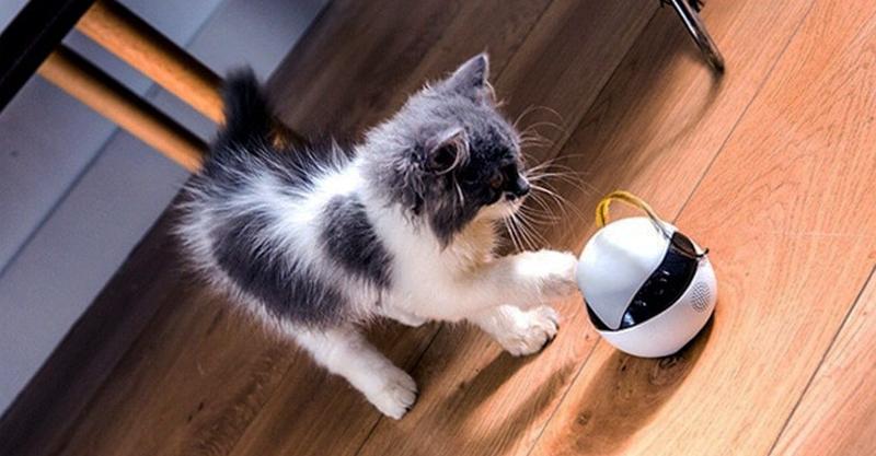專為貓打造「球球機器人」比奴才更貼心!能跟貓溝通「還幫你訓練」