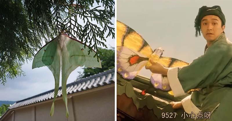 卡在樹上的是「風箏」還是「蛾」? 網友:那是秋香的紙鳶