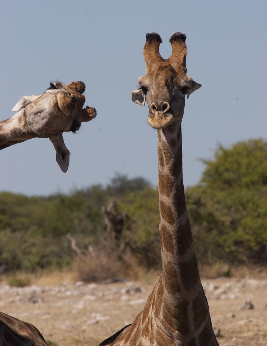 2020年「最爆笑野生動物攝影獎」照片曝光 工讀生快給我出來啦!