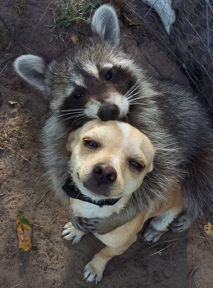 24對證明「我們都被電影騙了」的跨族群友誼 誰說貓咪和老鼠就是天敵?