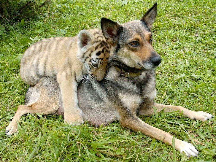 動物跨族群友誼