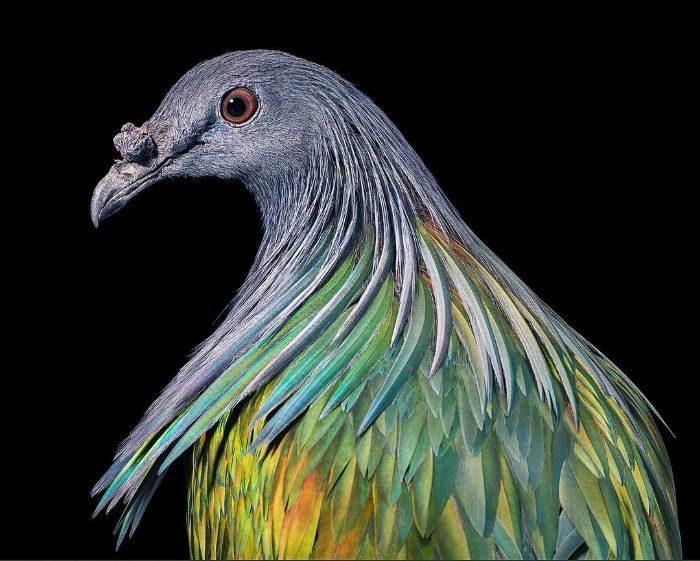 世界稀有鳥類