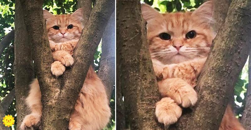 15張「喵星人是世界最大謎團」最佳例證照 貓貓交「新男友」主人崩潰